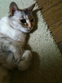 ◆猫マッサージ